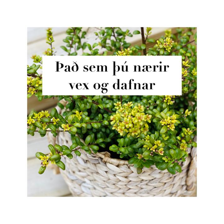 Að þykja vænt um sjálfansig